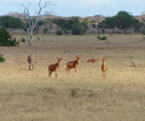 Costo Safari Kenya
