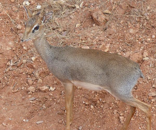 Costo Safari Kenya BARAKA