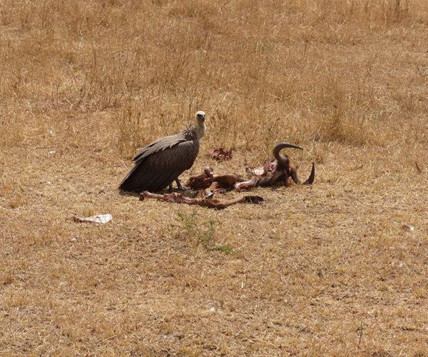 Kenya SafarI Masai Mara BARAKA SAFARI KENYA