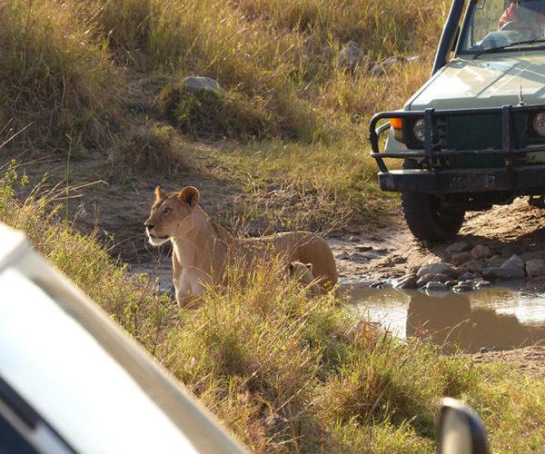Masai Mara Kenya BARAKA