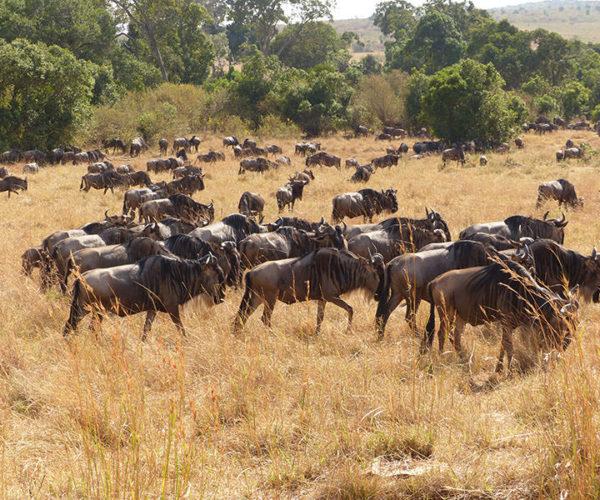 Masai Mara Kenya BARAKA SAFARI KENYA