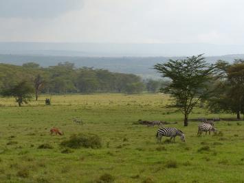Parchi Kenya NAKURU LAKE