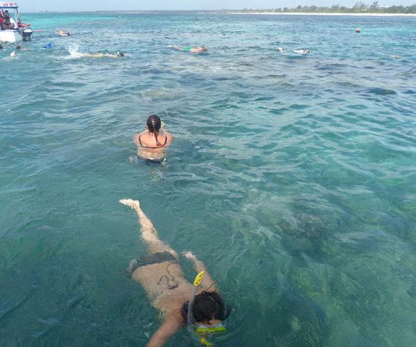 Safari Blu Isola Delle Mangrovie