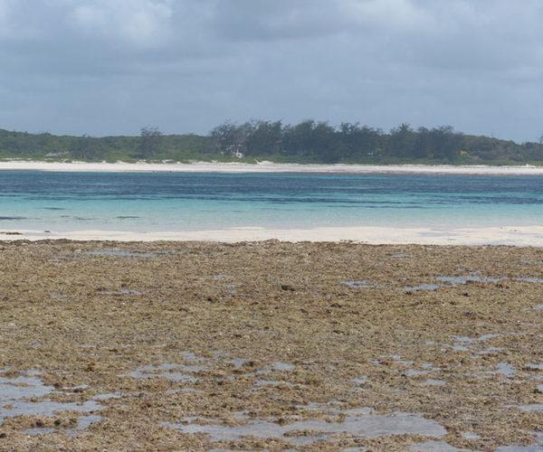 Safari Blu Isola Delle Mangrovie BARAKA SAFARI