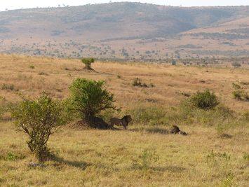 Safari Kenya BARAKA