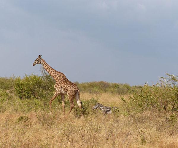 Safari Kenya Masai Mara BARAKA SAFARI