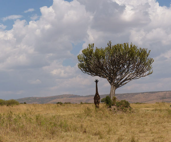 Safari Kenya Masai Mara BARAKA SAFARI KENYA