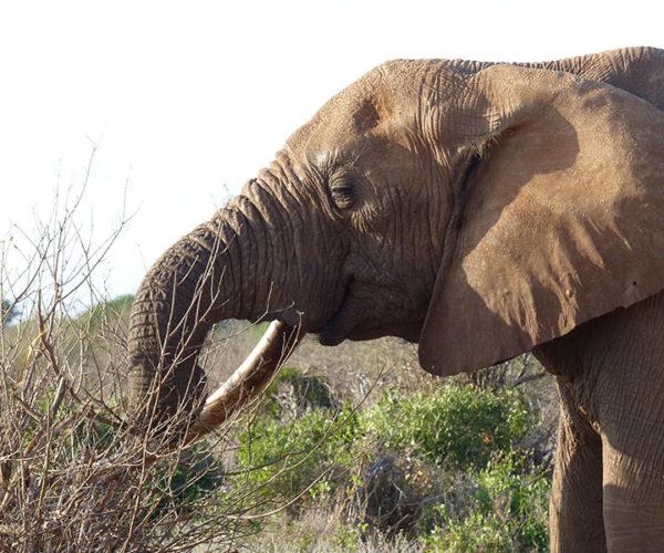 Safari Kenya Prezzi BARAKA