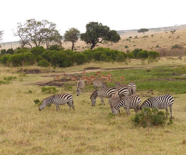 Safari Masai Mara Kenya BARAKA SAFARI