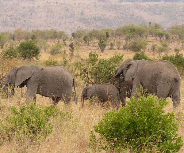 Safari Masai Mara Kenya BARAKA SAFARI KENYA