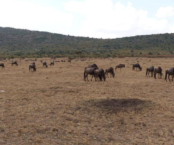 Safari Masai Mara Da Watamu