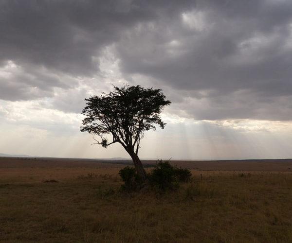 Safari Masai Mara Da Watamu BARAKA SAFARI