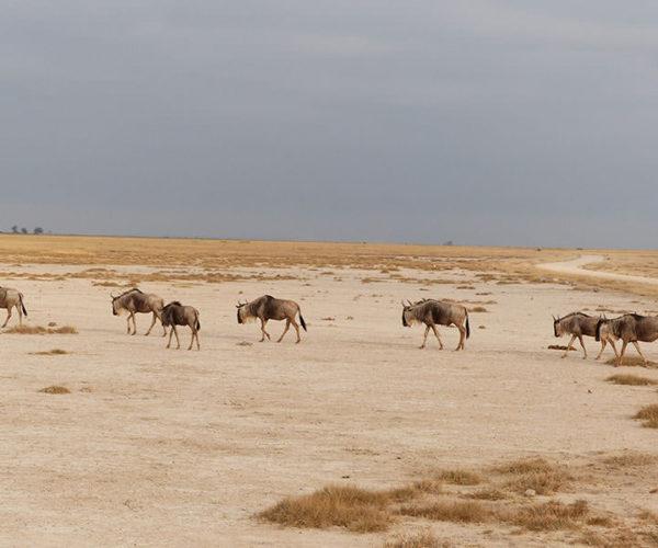 Safari Tsavo Est E Amboseli BARAKA SAFARI