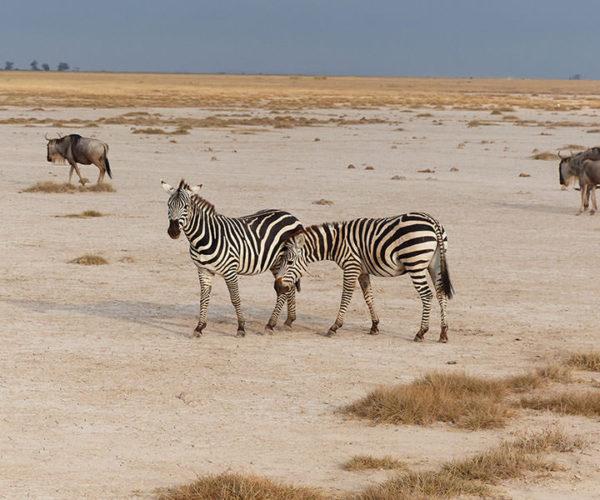 Safari Tsavo Est E Amboseli BARAKA SAFARI KENYA