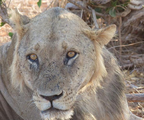 Safari Tsavo Est E Ovest BARAKA SAFARI