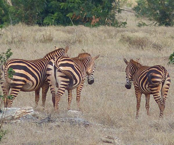 Safari Tsavo Est E Ovest BARAKA SAFARI KENYA