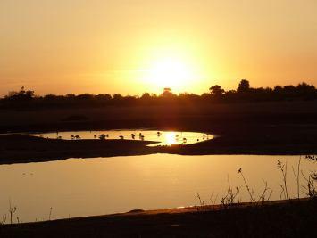 Safari Tsavo Est E Ovest