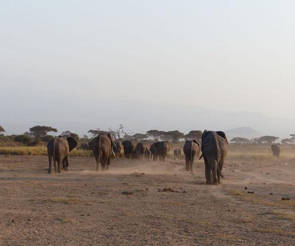 Safari Kenya AMBOSELI Baraka