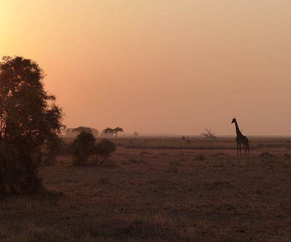 Safari Kenya AMBOSELI Tramonto