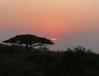 Safari Kenya AMBOSELI Watamu
