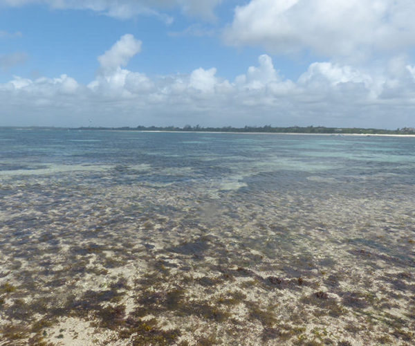 Escursione Isola Delle Mangrovie