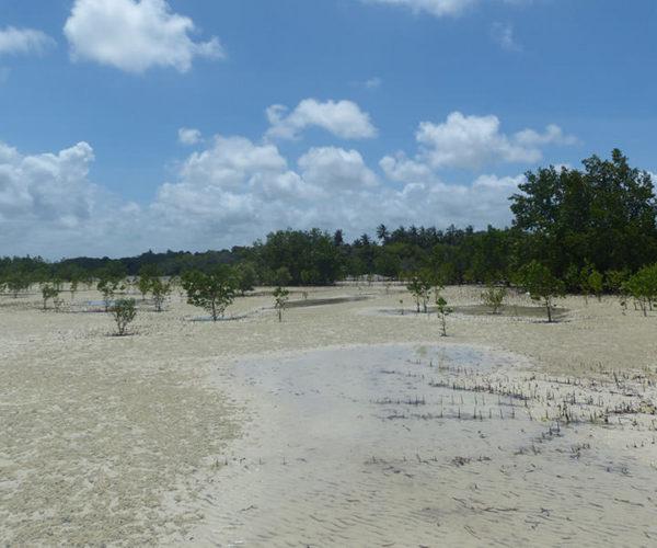 Isola Delle Mangrovie BARAKA SAFARI