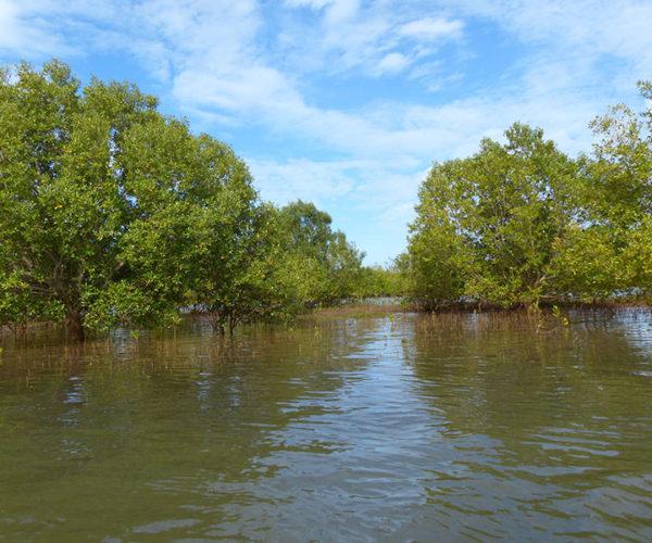 Kenya Safari Mare Mangrovie
