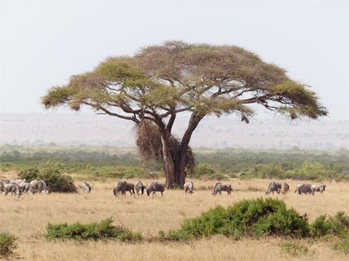 safari-1-giorno-e-mezzo