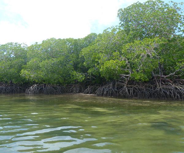 Safari Isola Delle Mangrovie