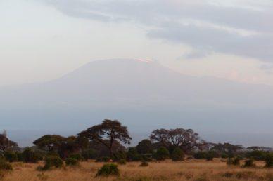 Kilimangiaro dal parco Amboseli