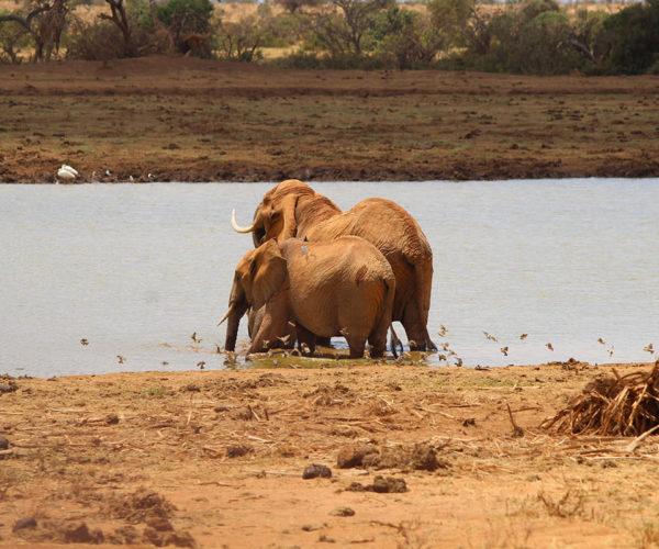 elefanti-parco-tsavo-est