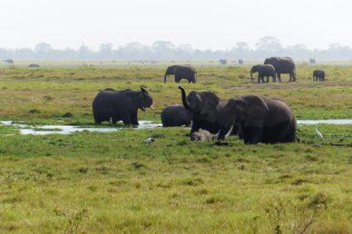 Elefanti presso il parco Taita Hills