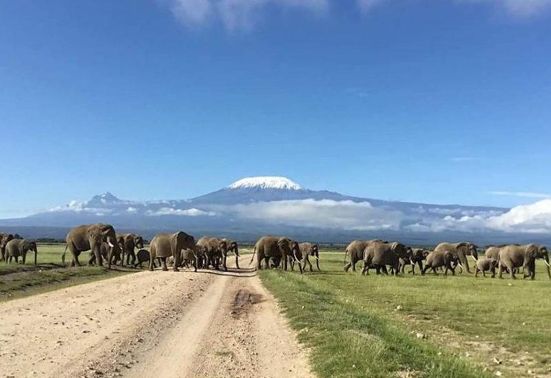 kilimangiaro-vista-da-parco-amboseli