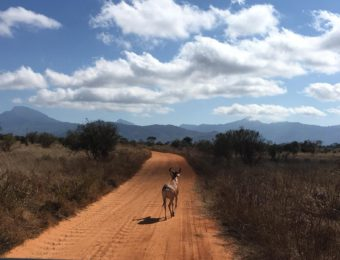 offerte-safari-in-kenya-7-giorni