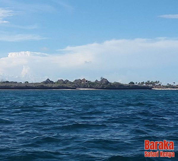 escursione-isola-mangrovie-barakasafarikenya-10