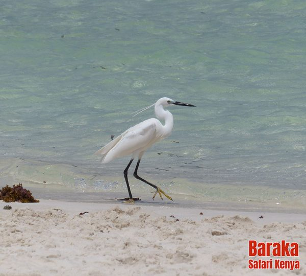 escursione-isola-mangrovie-barakasafarikenya-17