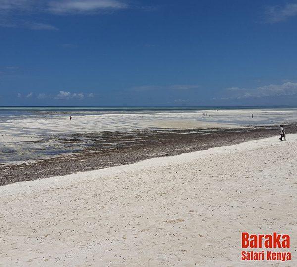 escursione-isola-mangrovie-barakasafarikenya-2