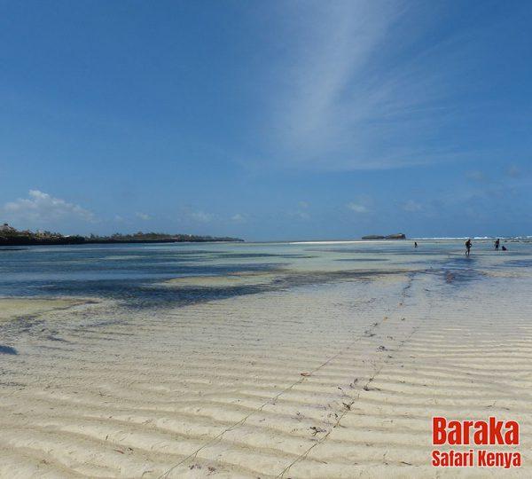 escursione-isola-mangrovie-barakasafarikenya-24