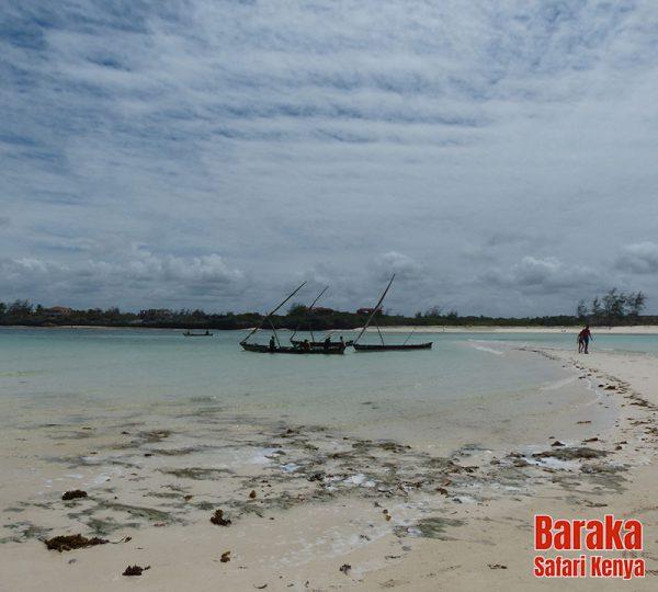 escursione-isola-mangrovie-barakasafarikenya-26