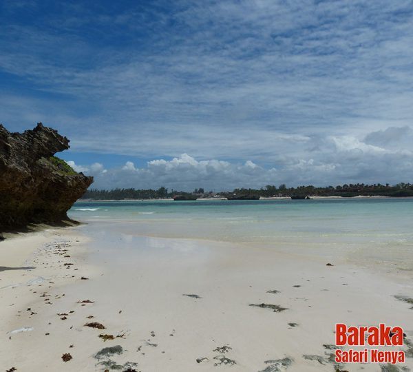 escursione-isola-mangrovie-barakasafarikenya-27