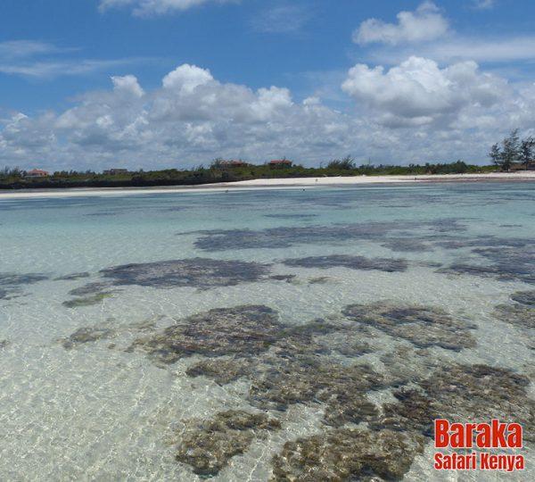 escursione-isola-mangrovie-barakasafarikenya-28
