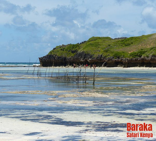 escursione-isola-mangrovie-barakasafarikenya-29