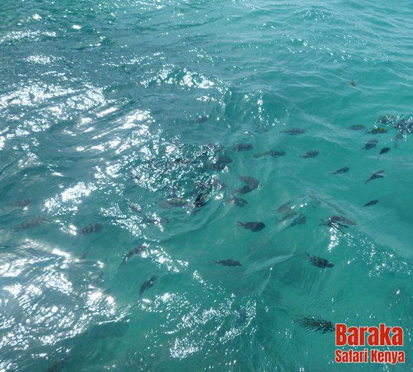 escursione-isola-mangrovie-barakasafarikenya-31