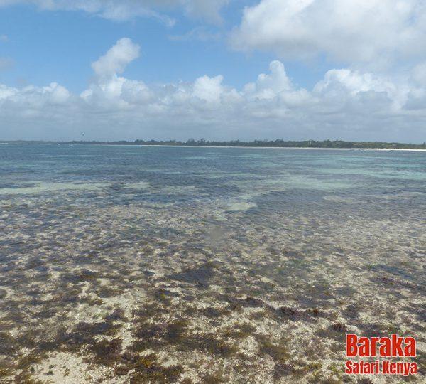escursione-isola-mangrovie-barakasafarikenya-33