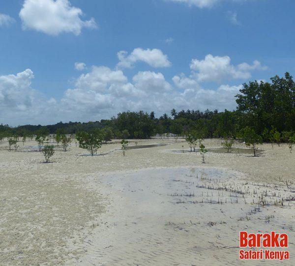 escursione-isola-mangrovie-barakasafarikenya-35