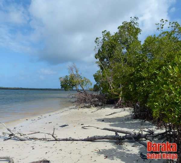 escursione-isola-mangrovie-barakasafarikenya-36