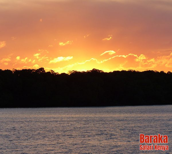 escursione-isola-mangrovie-barakasafarikenya-38