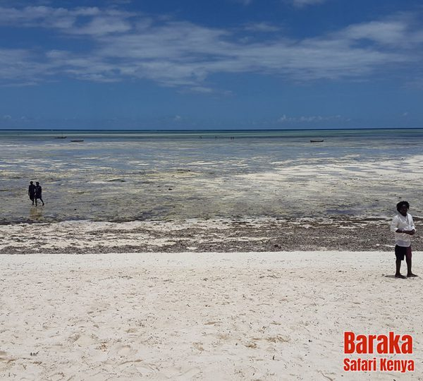 escursione-isola-mangrovie-barakasafarikenya-4