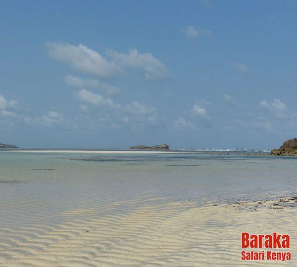 escursione-isola-mangrovie-barakasafarikenya-41