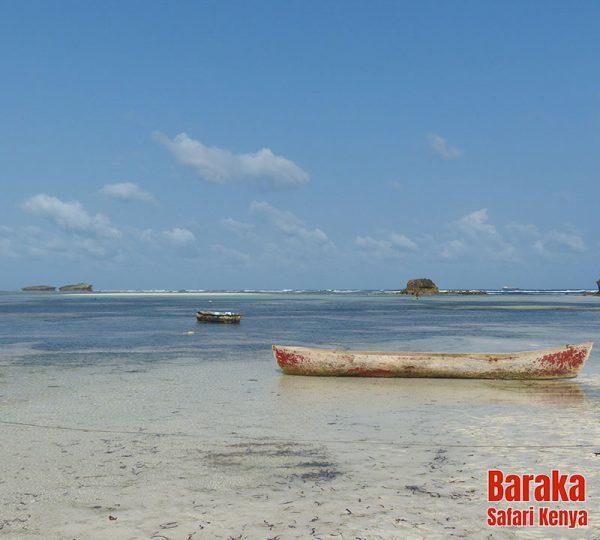 escursione-isola-mangrovie-barakasafarikenya-42